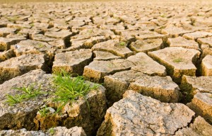 Climate change causes drought